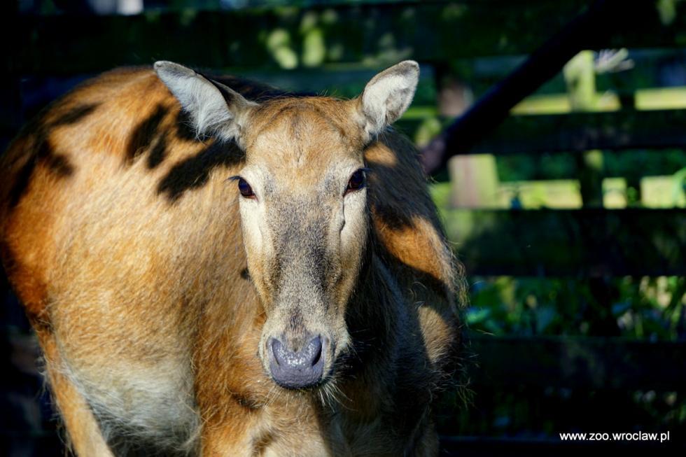 Nowy mieszkaniec wrocławskiego zoo - odkryty jako wymarły